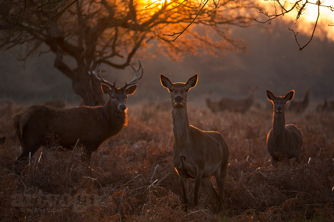 Family in the sunset by Alex Saberi