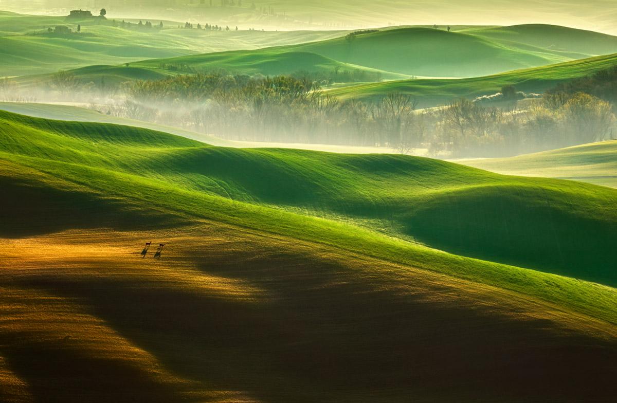 Freedom by Krzysztof Browko